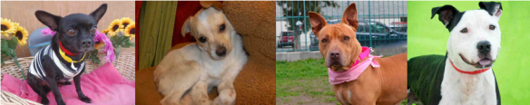Head to: http://www.laanimalservices.com for more information on these rescues.